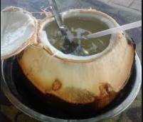 cara menbuat kelapa muda bakar dan rebus